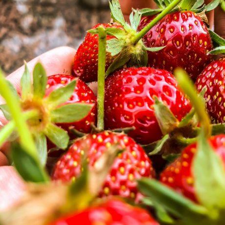 Himbeer-Erdbeercreme mit Minze