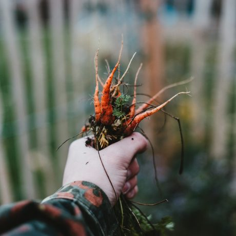 Karottenkartoffelcremesuppe