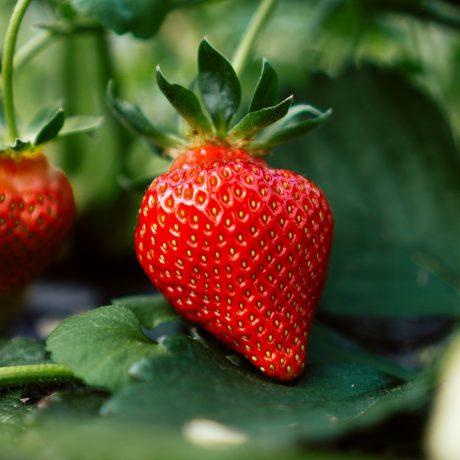 Versunkenes Obst