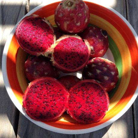 Pinke Drachenfrucht Brötchen / Baguettes